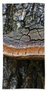 Tree Fungus 4 Beach Towel