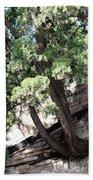Tree Growing Through Wall Beach Towel