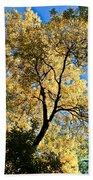 Tree In Fall Beach Towel