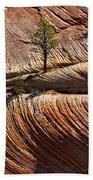 Tree In Flowing Rock Beach Towel