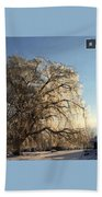 Tree In Ice Beach Towel