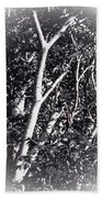 Tree In Summer In Black And White Beach Towel