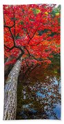 Tree In The Pond Beach Towel