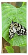 Tree Nymph Butterfly Beach Towel
