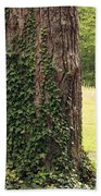 Tree Of Ivy Beach Towel