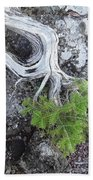 Tree On Rock Beach Towel