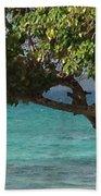 Tree Over Sapphire Beach Beach Towel