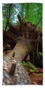 Tree Root Ball Beach Sheet