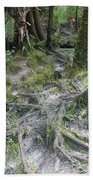 Tree Roots And Lithia Springs Beach Towel