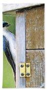 Tree Swallow At Nesting Box Beach Sheet