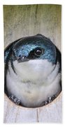 Tree Swallow In Nest Box Beach Towel