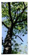Tree Top Beach Towel