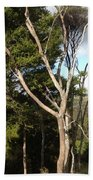Tree Tops And Beyond Beach Towel