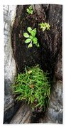 Tree Trunk Still Life Beach Towel