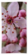 Trees Art Prints Canvas Pink Blossoms Spring Blue Sky Baslee Troutman Beach Towel