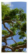 Trees In Bermuda Beach Towel