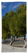 Trees In January Beach Sheet by Jo Ann