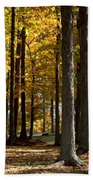 Tree's In The Forest Beach Towel