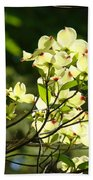 Trees Landscape Art Sunlit White Dogwood Flowers Baslee Troutman Beach Towel