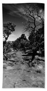 Trees Of Canyon Lands Beach Towel