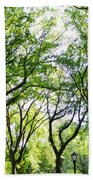 Trees Of Central Park, Nyc Beach Towel