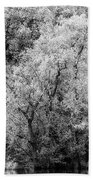 Trees On The River Beach Towel