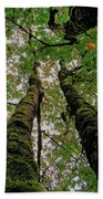 Trees Upward View Beach Towel