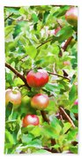 Trees With Red Apples In An Orchard Beach Towel