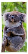 Treetop Koala Beach Towel