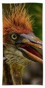Tri Colored Heron Chick Beach Towel