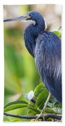 Tri-colored Heron On A Branch  Beach Towel
