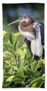 Tri-colored Heron On Guard  Beach Towel