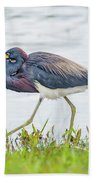 Tricolor Heron Beach Towel