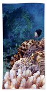 Tridacna Squamosa  Beach Towel
