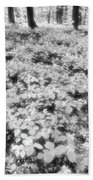 Trilliums On The Forest Floor Bw Beach Towel