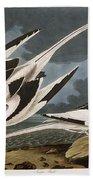 Tropic Bird Beach Sheet