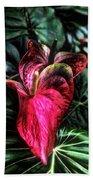 Anthurium Red Tropical Flower Beach Towel
