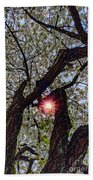Trunk Of A Cherry Tree Blooming With White Flowers Beach Towel