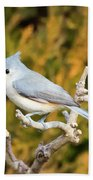 Tufted Titmouse On A Branch Beach Towel
