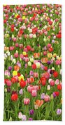 Tulip Field Beach Sheet