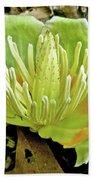 Tulip Poplar Flower - Liriodendron Tulipifera Beach Towel