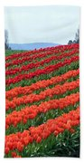 Tulip Town 18 Beach Towel