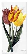 Tulip (tulipa Gesneriana) Beach Towel