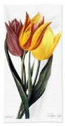 Tulip (tulipa Gesneriana) Beach Sheet