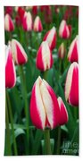 Tulips 7 Beach Towel