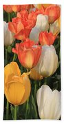 Tulips Ablaze With Color Beach Towel