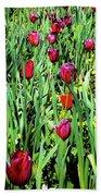 Tulips Blooming Beach Towel