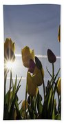 Tulips Blooming With Sun Star Burst Beach Towel