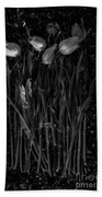 Tulips Decaying At Sunset Beach Towel