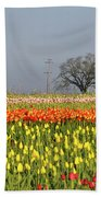 Tulips Morning Landscape Beach Towel